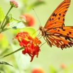 Joli mois mai de 2017 - papillon1